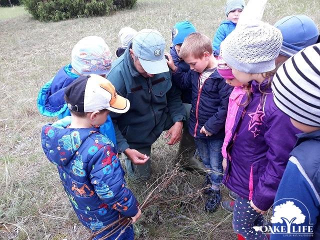 ovisok a Peszéri-erdőben