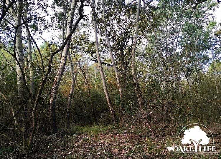 Csuszka költőhely a Peszéri-erdőben