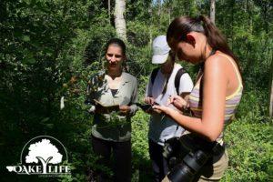 hernyók-peszéri-erdő-oakeylife-felmérés